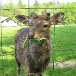 Pletivo na ploty
